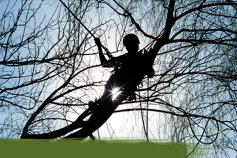 Baumpflege und Baumsanierung