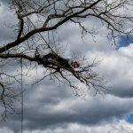 Baumpflege - Seilklettertechnik- Baumschnitt- Baumkletterer-27