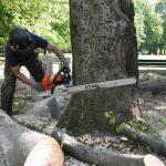 Fällung, Baumfällung 4